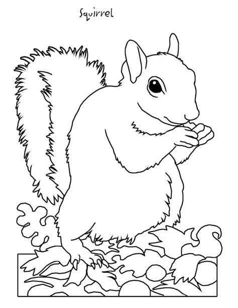 squirrel coloring page hibernation pinterest jungle