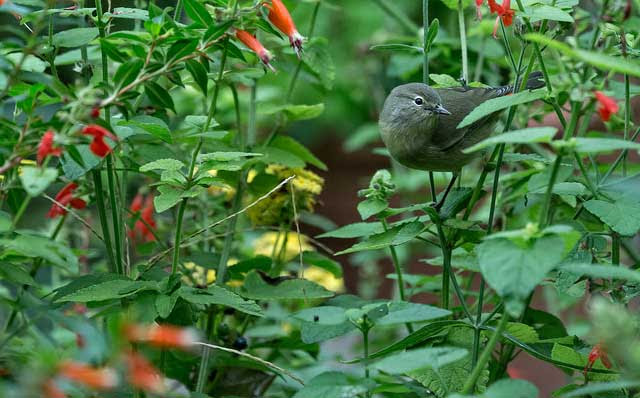 Bird in a Green             Bush