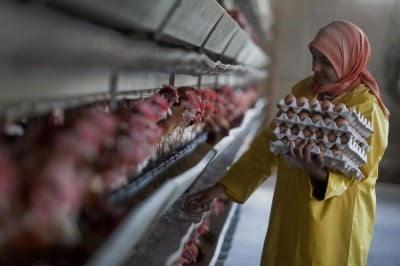 Cerca de 70% das novas doenças que infetam seres humanos têm origem animal, alerta ONU