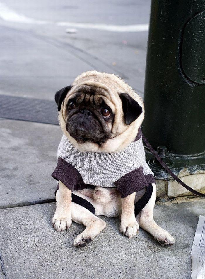 http://de.acidcow.com/pics/20090925/saddest_dog_04.jpg