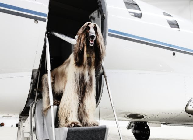 The service is offered by a private jet company and it allows owners to travel alongside their beloved dogs