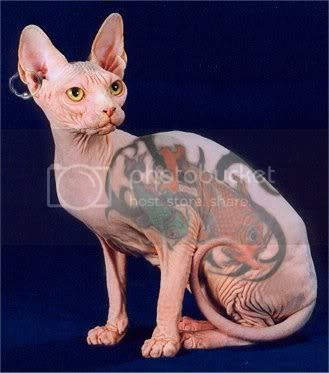 Picture Of Cat Tattoo - Cat Tattoo Design This cool cat has a tat. posted by