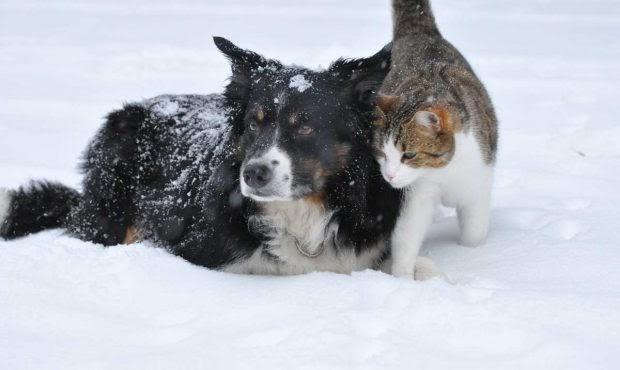 Temporada de invierno: salir con tu perro a la nieve