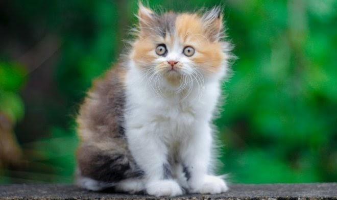 Финские ученые вывели семь ключевых качеств кошек