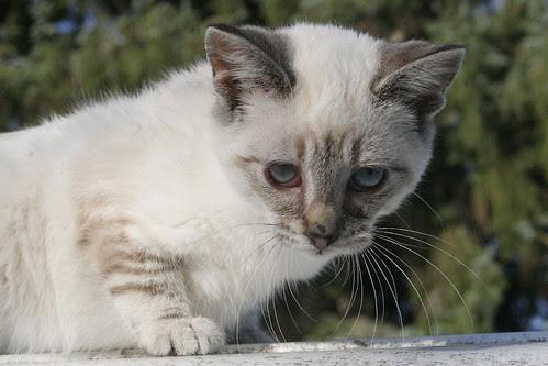 Fran The Feral Kitten