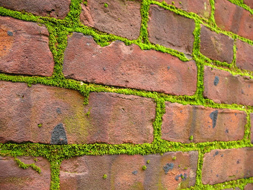 moss weeds on brick building