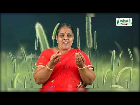 2nd EVS எனது அற்புதமான உடல் அலகு 2 பருவம் 1 Kalvi TV