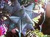 handmade glittered paper star ornament