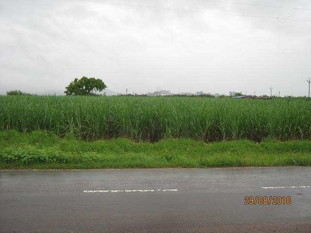 Last Crop in Tathawade