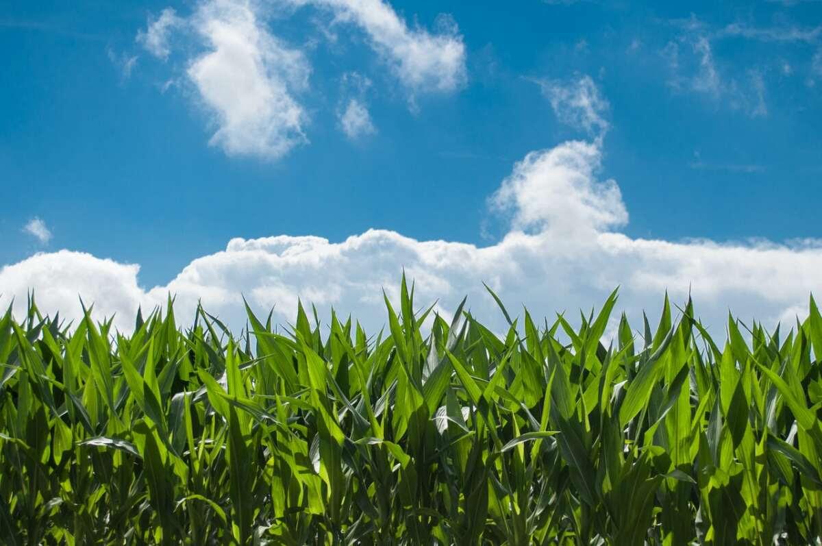 Mês de maio segue com poucas chuvas (FOTO: Reprodução/Pexels)