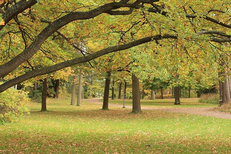 File:Fall colors in Seurasaari.JPG