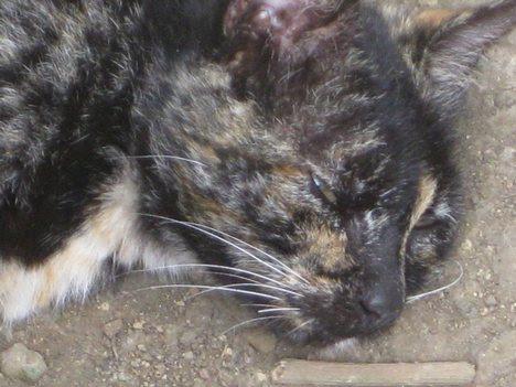 Dead Cat In Road. Dead Cat