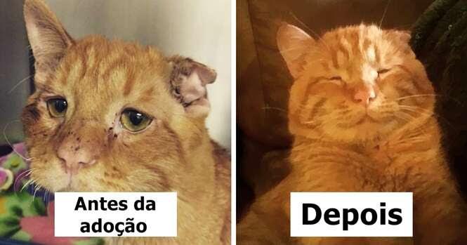 """Casal adota """"gato mais triste do mundo"""" e o salva de ser sacrificado"""