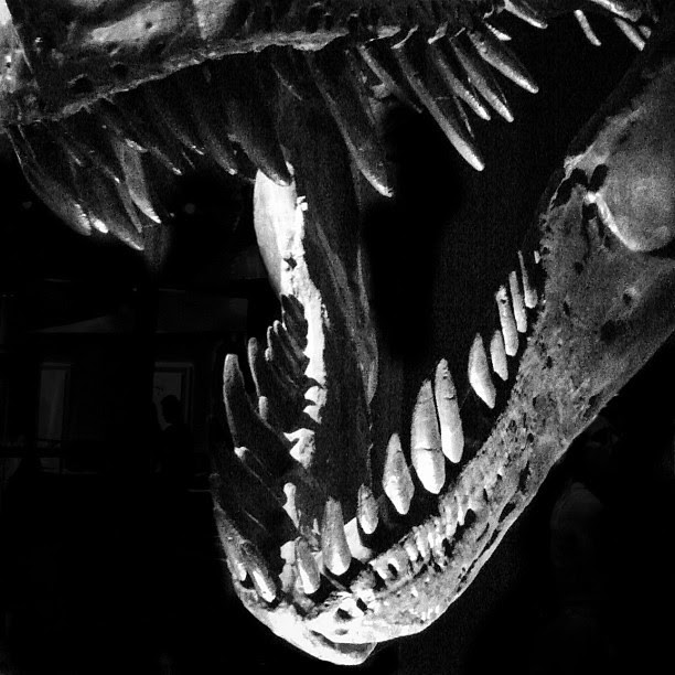 Teeth #tyrannosaurusrex #tyrellmuseum #trex #dinosaur #fossil #teeth