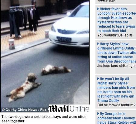 A cadela foi atropelada