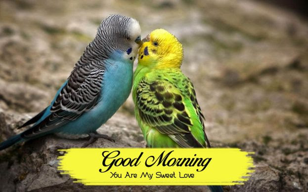 Good Morning You Are My Sweet Love Good Morning Images Quotes