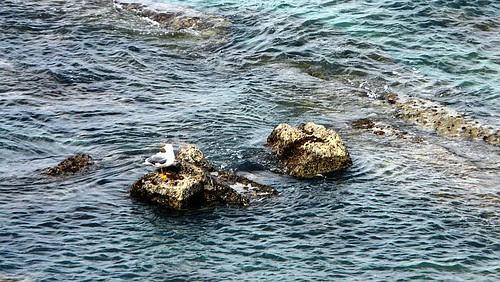 Gaviota descansando en una roca