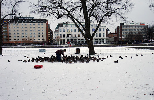 27 av 365 - Fågelliv by Yvonne L Sweden