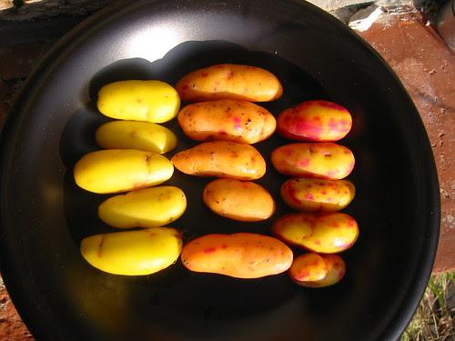 ulluco crop 2008