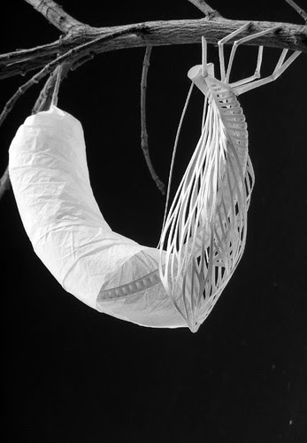 chrysalis-paper-sculpture