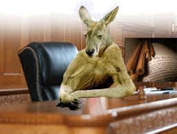 kangaroo court2