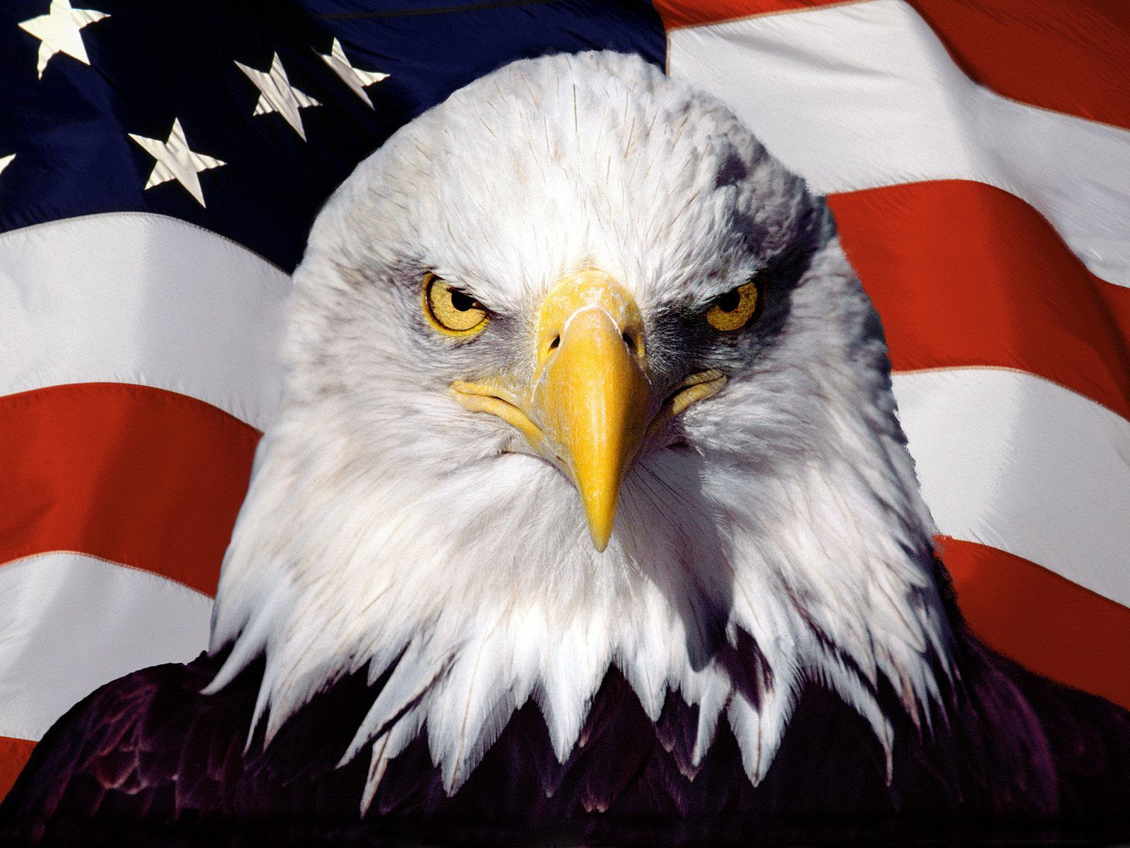 American flag with bald eagle overlay