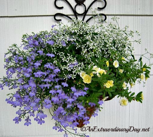 A trio of color make a lovely container garden : Create an Extraordinary Container Garden