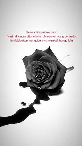 Gambar Bunga Mawar Merah Quotes