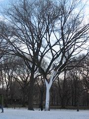 Tree-alone.