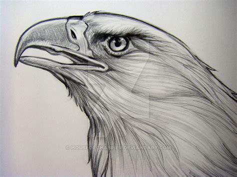bald eagle pencil detail   houseofchabrier  deviantart