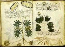voynich-manuscript2.jpg