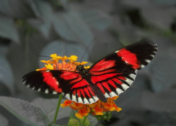 1251913628_57_butterfly_beauty (700x499, 182Kb)