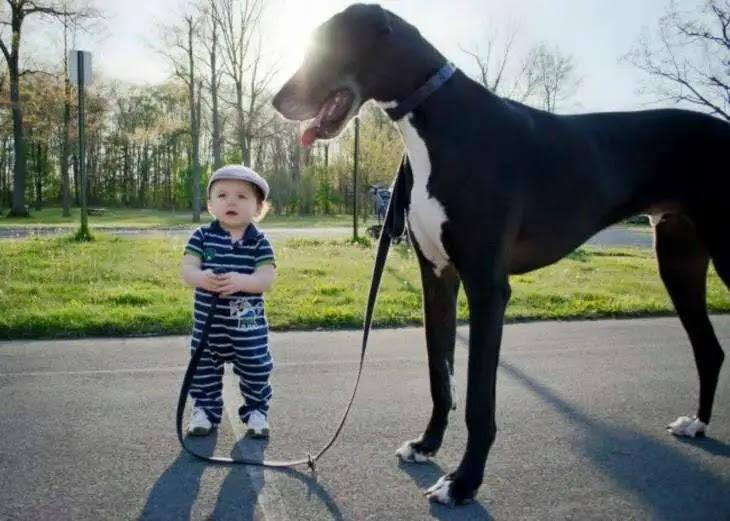 chien et enfant bébé