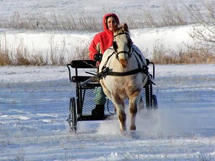 Dashing Through The Snow In A One Horse Open Sleigh Literally