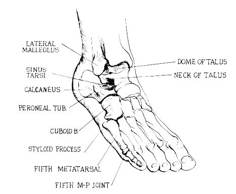Orthoteers Foot Amp Ankle Examination