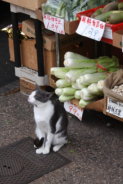 cat, chinatown, honolulu