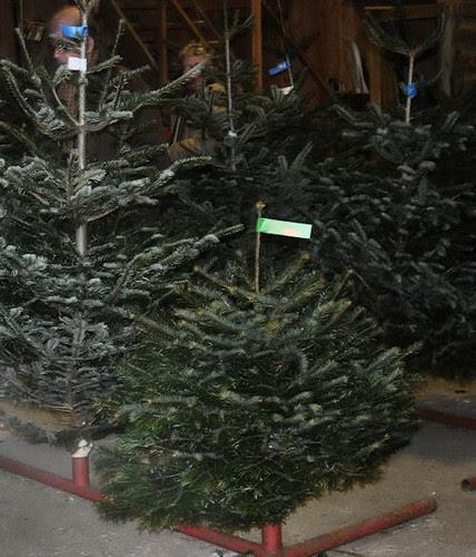 tree-farm :: juletregården #1