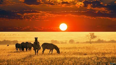 Home   Afrigalah