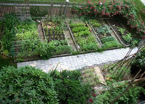 garden june 25 2007