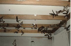 Swiftlet Farm that attracted Birds