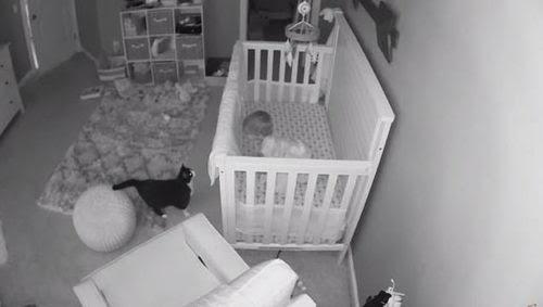 Padres quedan atónitos al ver lo cámara los encuentros entre su gato y su bebé cada noche
