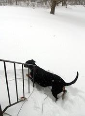 Lola_Snow_11211c