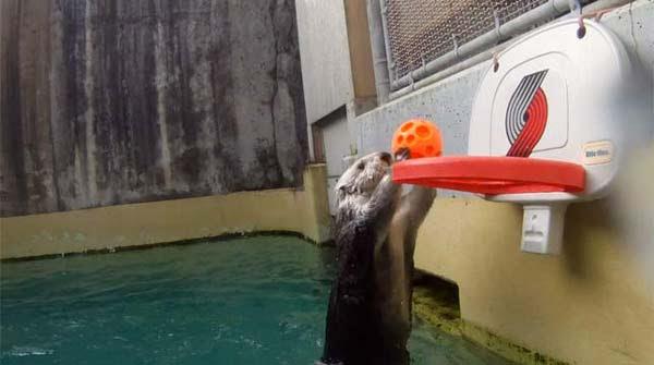 perierga.gr - Μια βίδρα είναι άσος στο μπάσκετ!!!