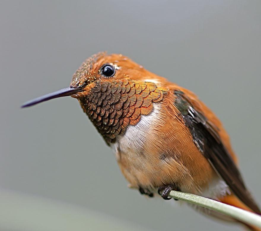 cute-beautiful-hummingbird-photography-8