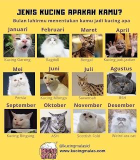 Kucing Ribut Lucu