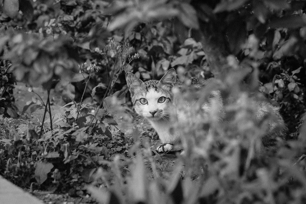 *Cat|75mm