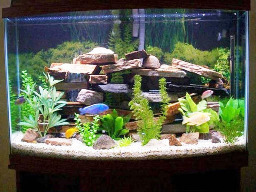 Small Fish Tank Decoration Ideas Bedroom Atmosphere Decorations Cute Eclipse Cake For A Table Designs Making Tiger Gravel And Apppie Org