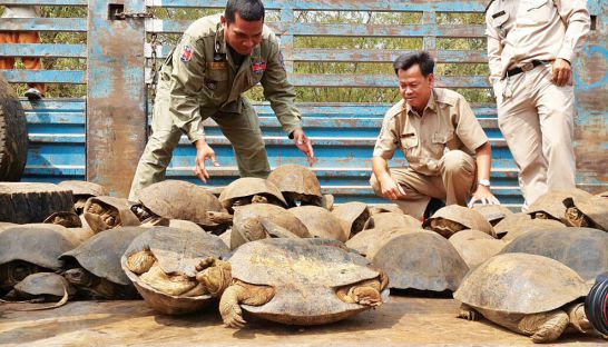 Forestry Administration officials display a haul of animals intended to be illegally sold in Vietnam. Photo supplied