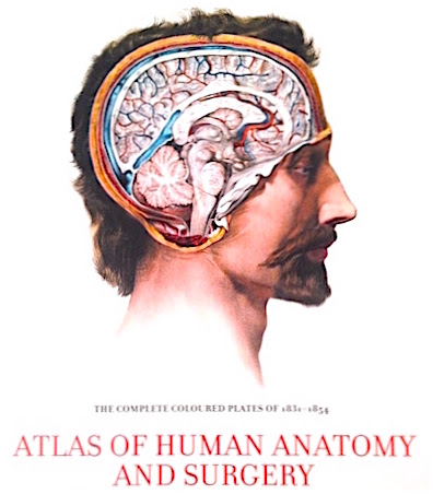 Atlas Of Human Anatomy & Surgery