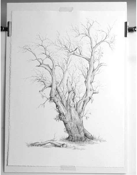 tree pencil drawings bing images   draw realistic